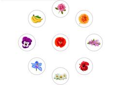 Gabarit A3 - 1 Intru Fruit Hiver dans les séries Fleurs  - Puzzle de la Réussite - Amalgam