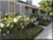 Flowering-Roses.jpg