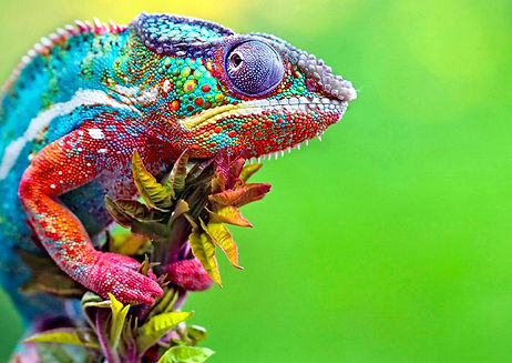 Colorful Lizard.jpg