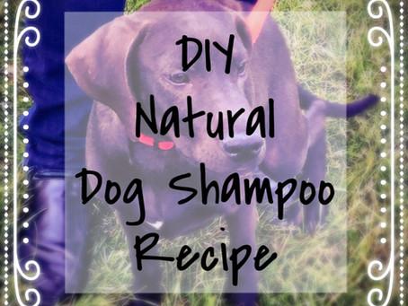 DIY Natural Dog Shampoo for the Sensitive Pup