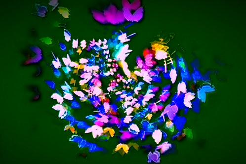 Flutter (LED Animation)