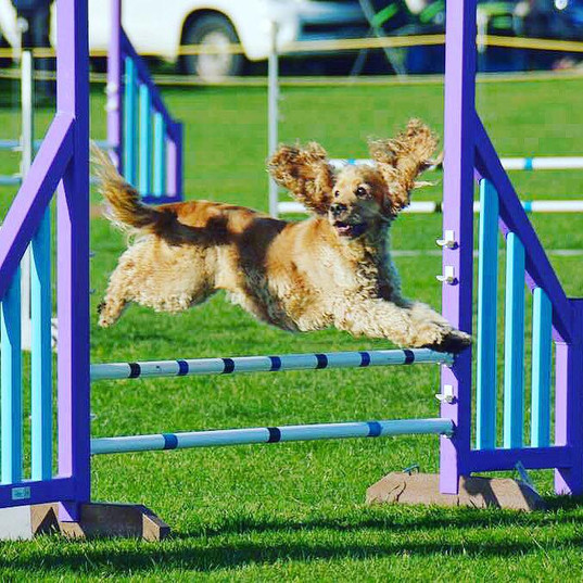 Lucy - Agility