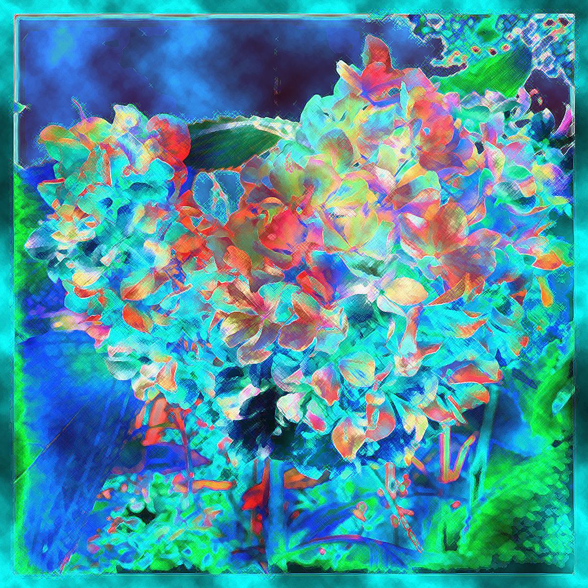 Dying Hydrangea