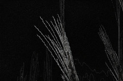 Grain Night