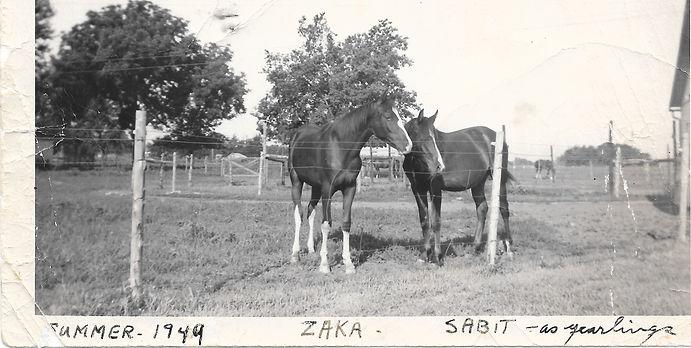 Zaka 1949 yearling with Sabit.jpg