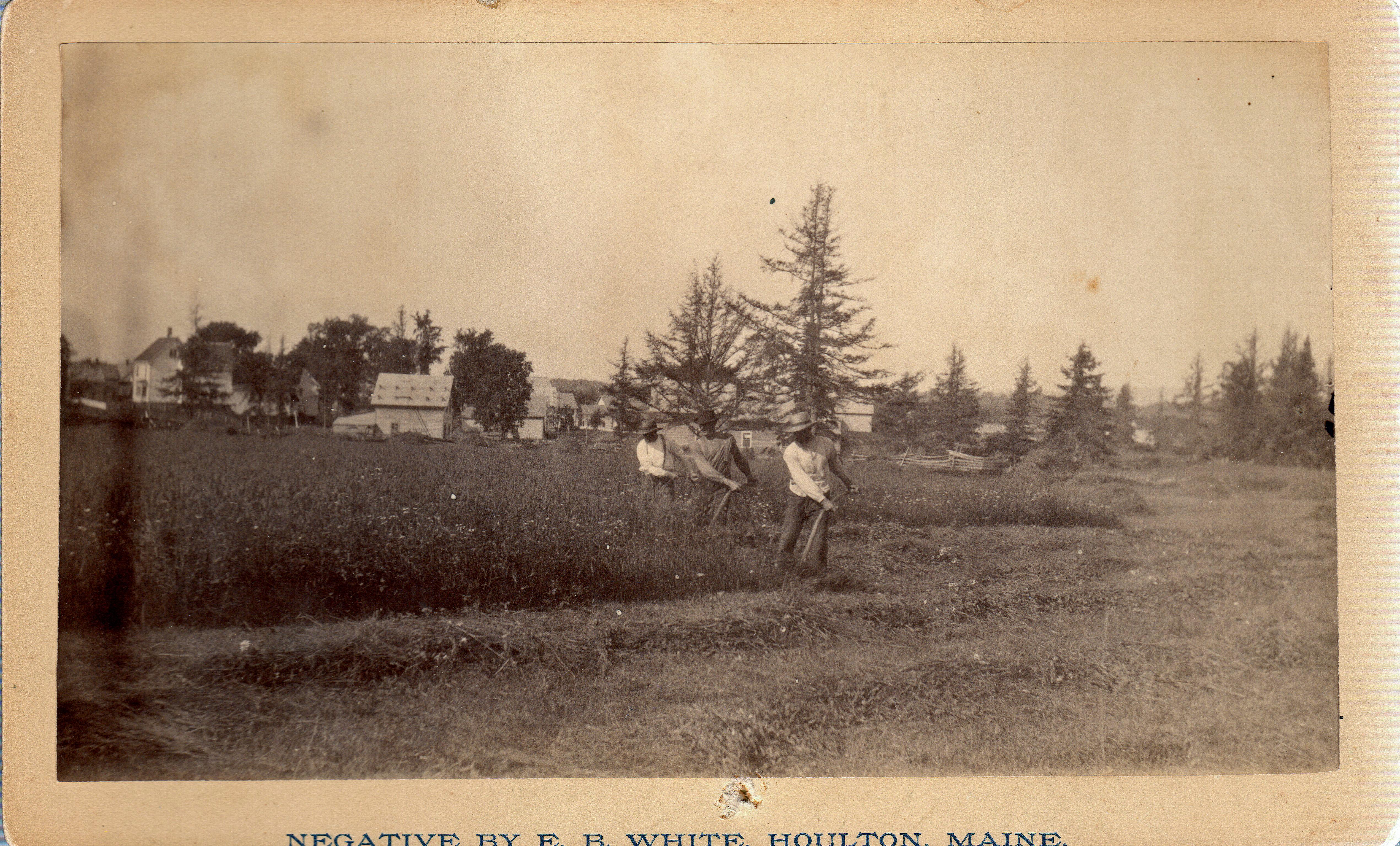 Cutting Hay Charles Tenney Farm