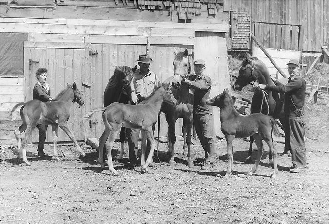 Mares & Foals 1951-Khalasa with Bint Kha
