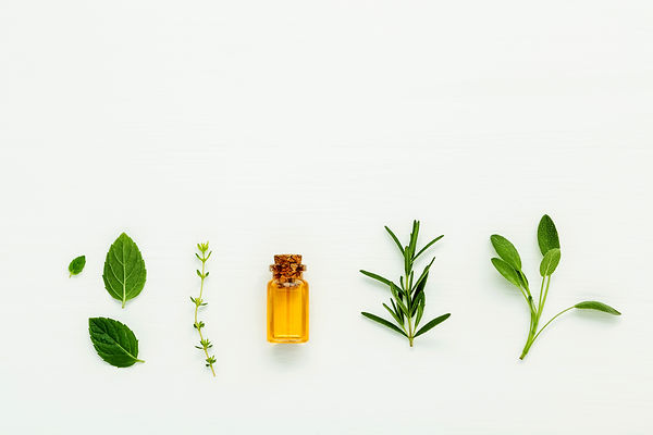 Bottle of essential oil with  fresh herb