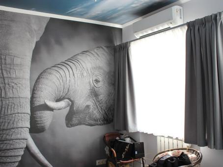 Коротко о слонах :)