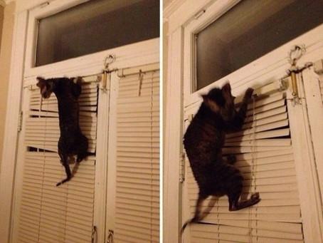 Всем любителям котиков посвящается...