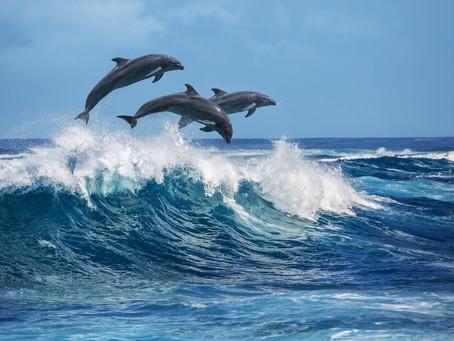 Delfine in der Karibik