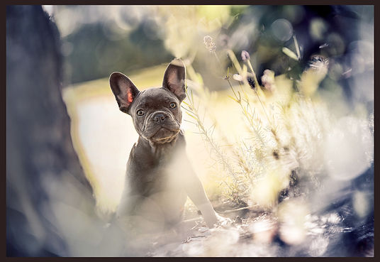 Tierfotografie von Anja Reckendrees. Hund on Location. Natur. Fotografenmeister werden in Kiel. Photo+Medienforum Kiel
