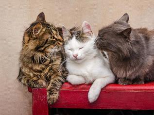 """""""La vita sociale ed emotiva del gatto"""""""