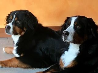 Gitane & Amelie