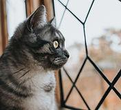 closeup-shot-beautiful-black-gray-patter