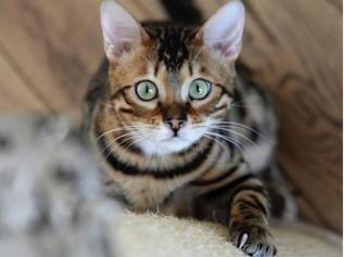 """""""Il mondo percettivo del gatto"""""""