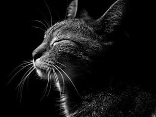 """""""Comunicazione e linguaggio del gatto"""""""