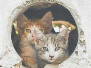 """""""Il gatto in gattile: il benessere, lo stress e il trauma"""""""