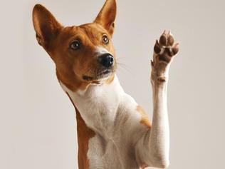 """""""Il cane nella realtà del canile"""""""