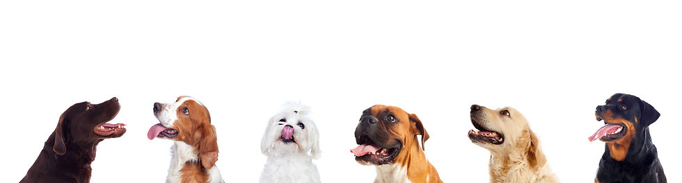 differents-dogs-looking-camera.jpg