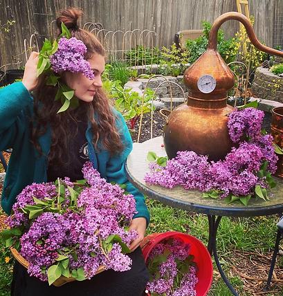 Lilac Diststillation