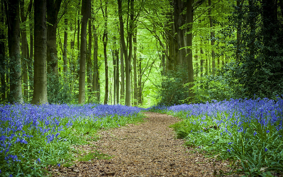 forest path with flowers.jpg