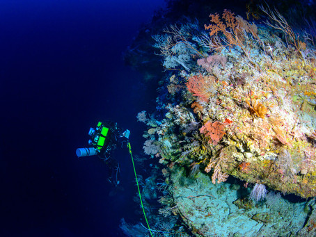 Deep reefs threatened by climate change