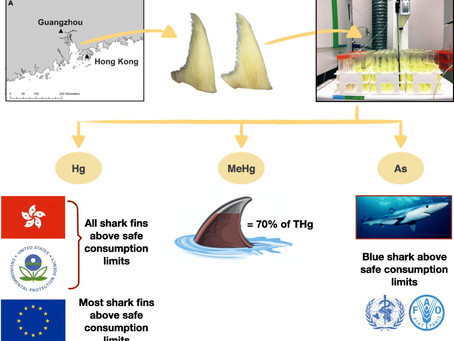 Shark fins in Hong Kong & China contain high mercury levels