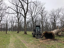 Arens Land Clearing Pecan Grove