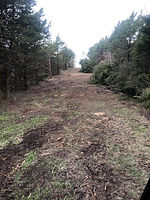 Arens Land Clearing Power Line