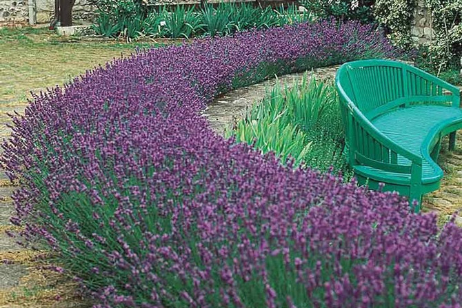 Please add lavender to your property !