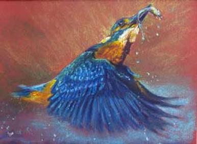 SPKingfisher.jpg