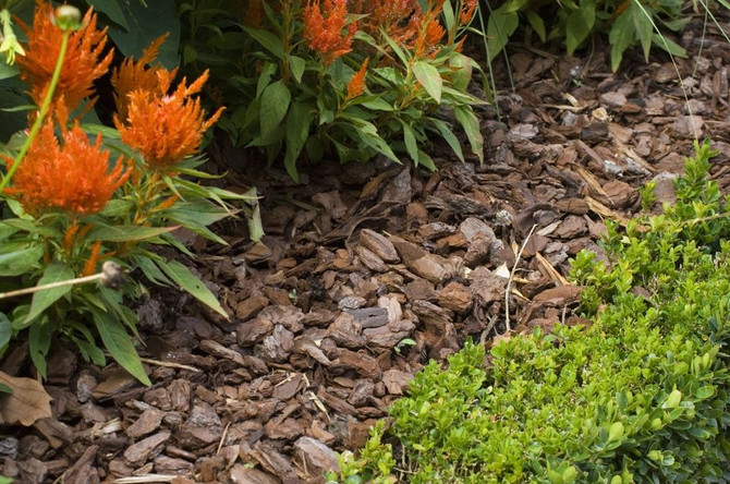 Ideas to make your yard low maintenance .....?