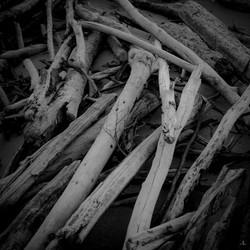 Driftwood Keurbooms