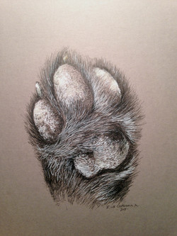 Lily's Paw
