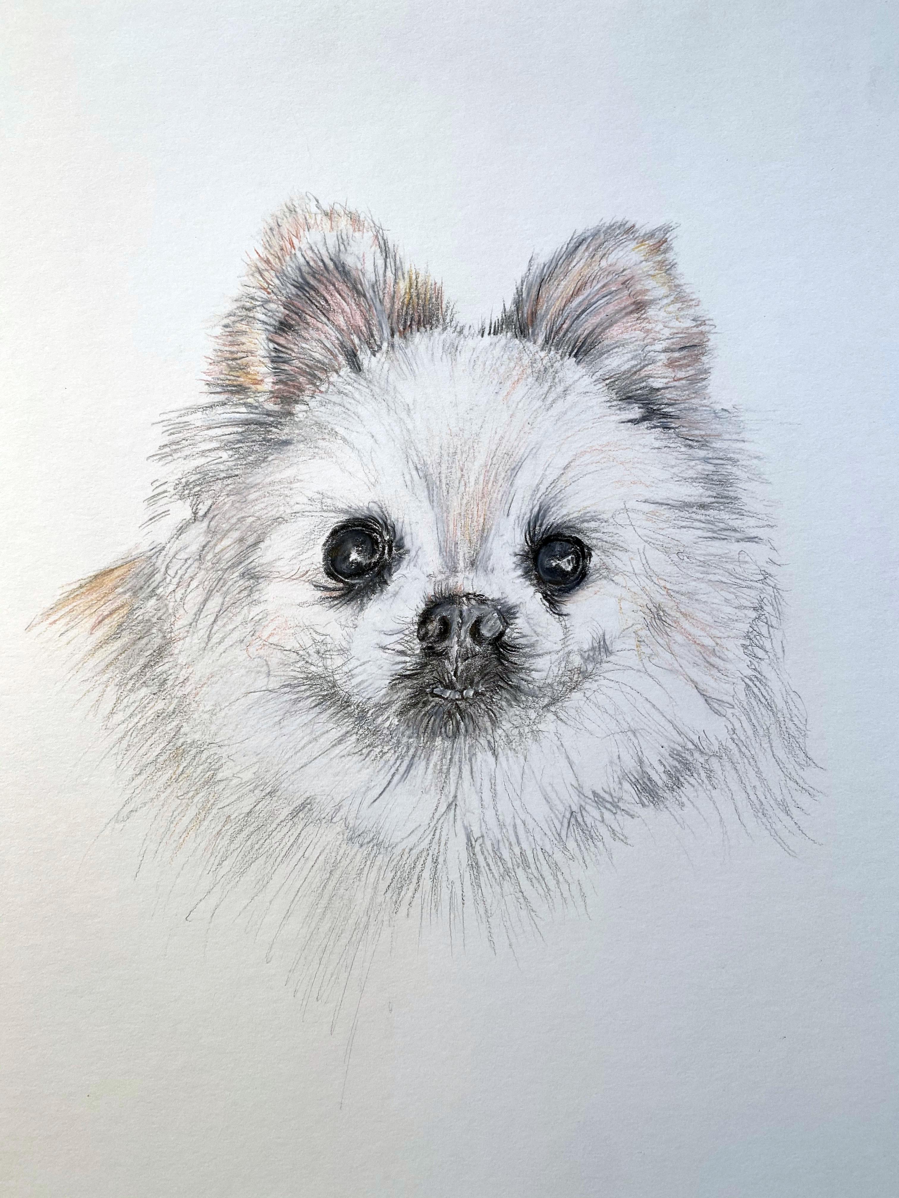 Dibble Dog