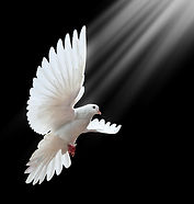 Dove_Alight.jpg