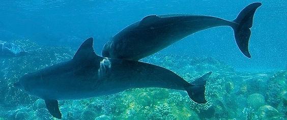 dolphins (1).jpg