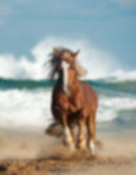 Wild Chesnut Draft Horse Running.jpg