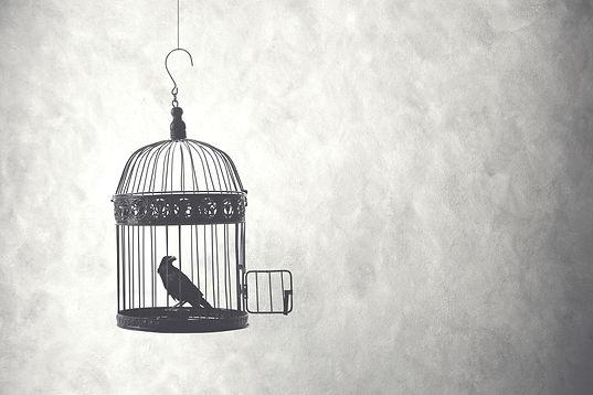 Free_bird.jpg