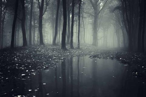 我模仿時間與森林的文法已很久了