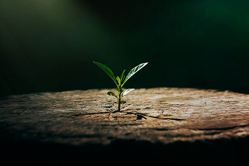 strong-seedling-growing-old-center-dead-
