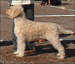 """AKC CH Two By Two Ice Ice Baby  """"aka Flurry"""""""