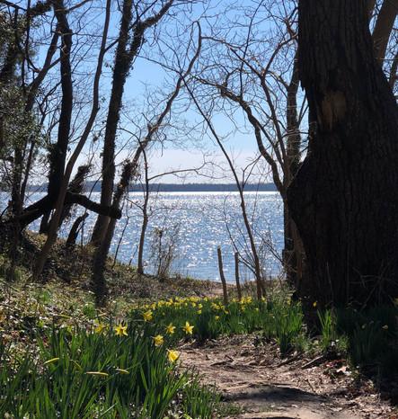 tc-path-of-daffodil-gulch_orig.jpeg