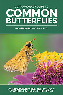 Free Butterfly e-guide cover.jpg