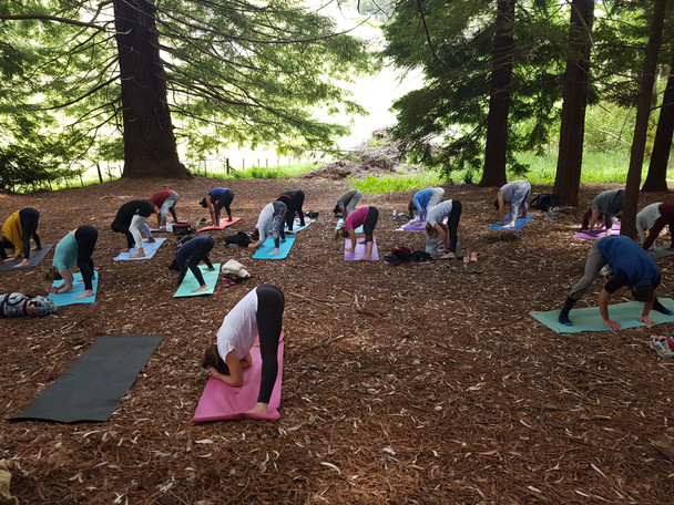Yoga in the Redwoods