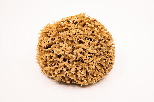 Honeycomb Sea Sponge
