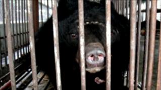 Cages of Shame