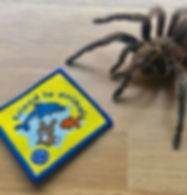 Charlotte the Chile rose tarantula and Explorer Allan's 'friends to animals' guide