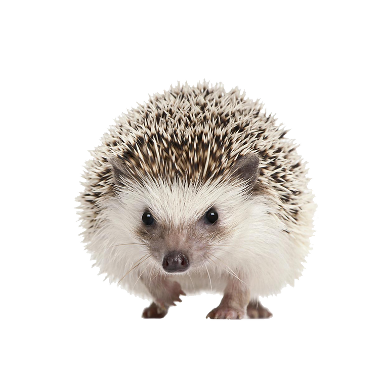 hedgehogpng.png